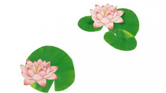 彩绘风格莲花和莲叶743943png图片素材