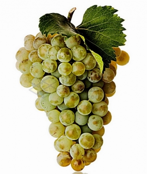 一串蜜汁葡萄png图片素材
