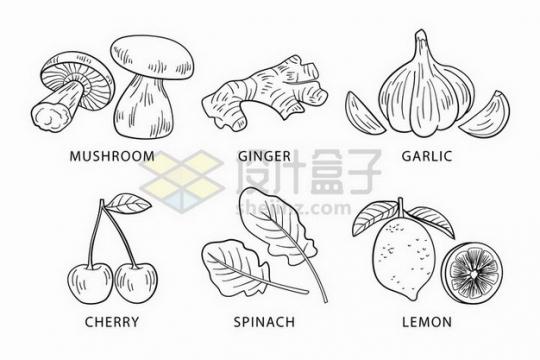蘑菇生姜大蒜樱桃生菜柠檬等蔬菜水果线条素描插画png图片免抠矢量素材