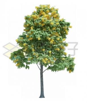 开着黄色花朵的绿树912446psd/png图片素材