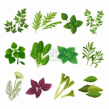 香菜薄荷葱段等绿叶蔬菜png图片免抠矢量素材
