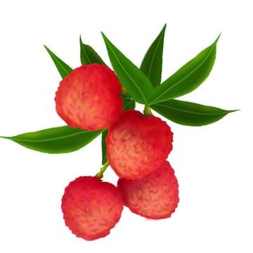 手绘风格荔枝热带水果图片免抠素材
