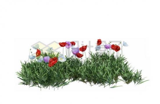 开着紫色红色午时花的草丛805493psd/png图片素材