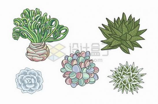 芦荟等各种多肉植物彩绘插画png图片免抠矢量素材