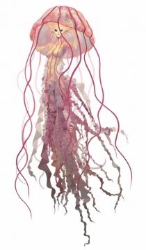 冥河水母彩色手绘插画584938png图片素材