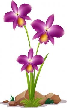 一株盛开了三朵花朵的蝴蝶兰鲜花图片免抠矢量素材