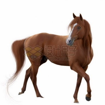 棕色皮毛的阿哈尔捷金马png免抠图片素材