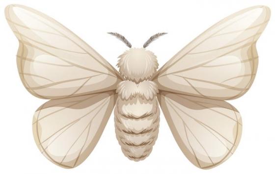 白色飞蛾昆虫图片免抠素材