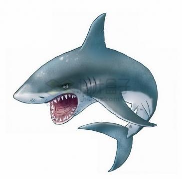 凶狠的鲨鱼大白鲨手绘卡通png图片素材