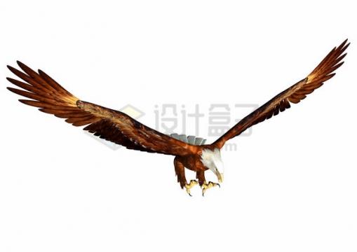 俯冲姿势的白头鹰雄鹰展翅png图片素材