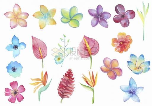 桃花樱花鸡蛋花红掌花等水彩画鲜花花卉png图片免抠矢量素材