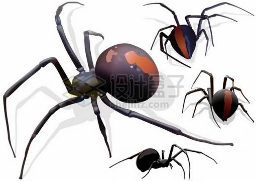 巨大的蜘蛛4个不同的角度523209png矢量图片素材