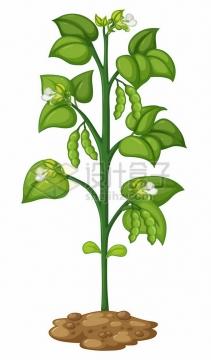 卡通一棵豌豆绿豆毛豆等青豆子植物527292png图片素材