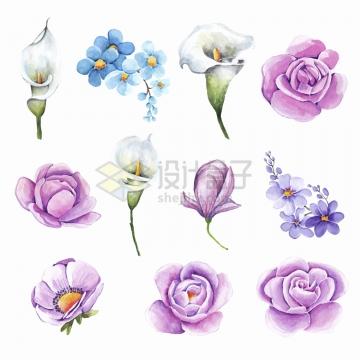 月季花马蹄莲等水彩画花朵鲜花png图片免抠矢量素材