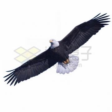 仰视视角的白头鹰雄鹰展翅png图片素材