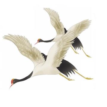 两只手绘风格飞翔中的仙鹤丹顶鹤png图片免抠素材