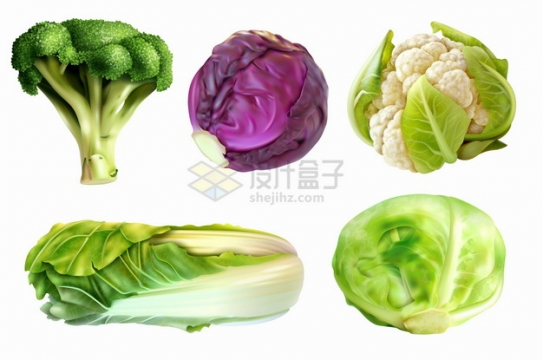 逼真的西兰花紫甘蓝花椰菜大白菜包菜等美味蔬菜png图片素材