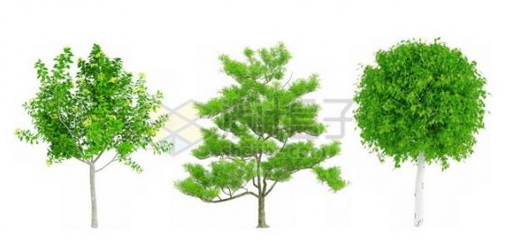 3种观赏植物绿植274492psd/png图片素材