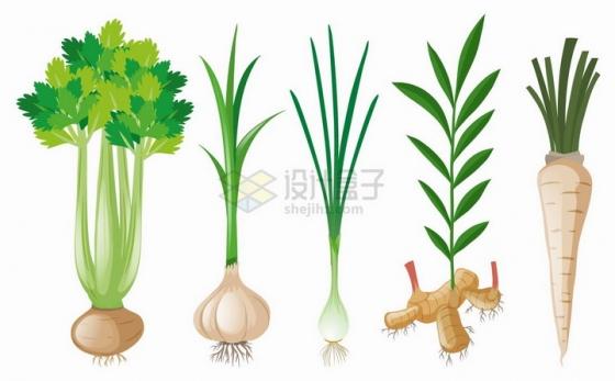 芹菜洋葱香葱生姜和萝卜等美味蔬菜png图片免抠矢量素材