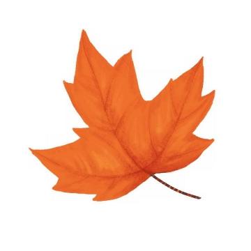 秋天发红的枫叶免抠PNG图片素材