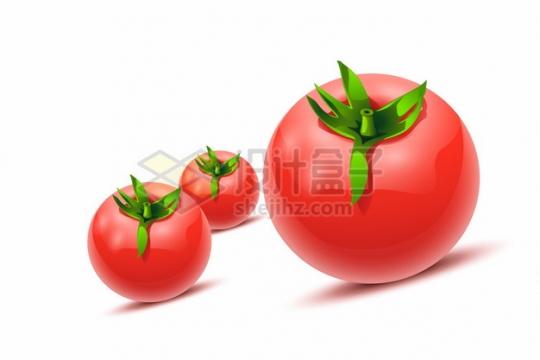 三颗逼真的西红柿番茄139244png矢量图片素材