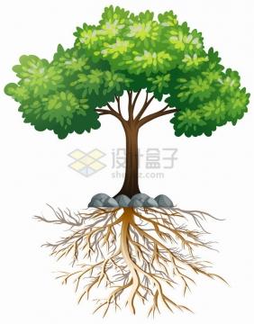绿色大树和错综的树根png图片免抠eps矢量素材