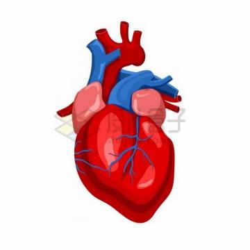 人体心脏大动脉静脉209983png免抠图片素材