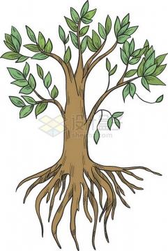 彩绘大树带树根和树叶png免抠图片素材