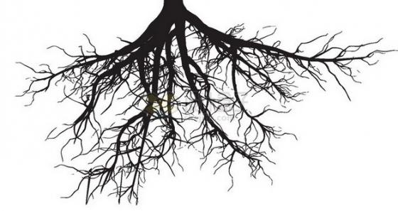 深灰色的树根png免抠图片素材