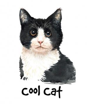 彩色手绘油画风格黑白牛奶猫猫咪图片宠物免抠素材