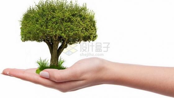 手掌上长出一棵绿树大树png免抠图片素材
