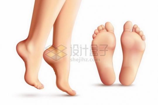 美女的美脚和脚心脚底板448778png矢量图片素材