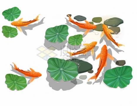 莲叶和水里的红色鲤鱼锦鲤364388png矢量图片素材