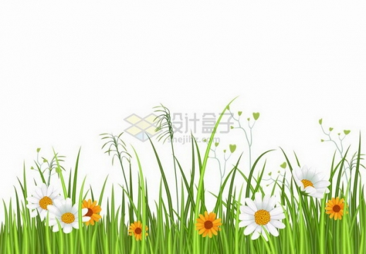 漂亮的翠绿色草丛和盛开的白色黄色雏菊花自然装饰png图片免抠矢量素材