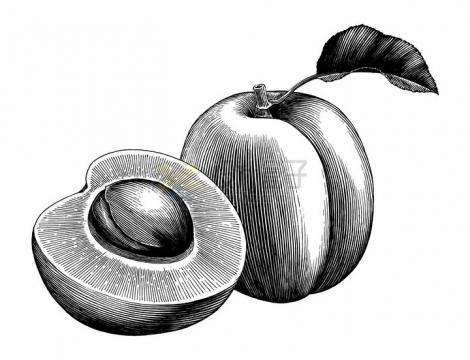 切开的桃子美味水果手绘素描插画png图片免抠矢量素材