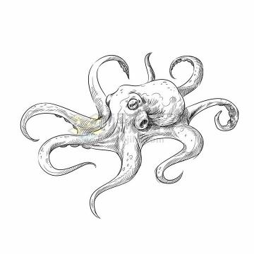 章鱼海洋动物手绘素描插画png图片免抠矢量素材